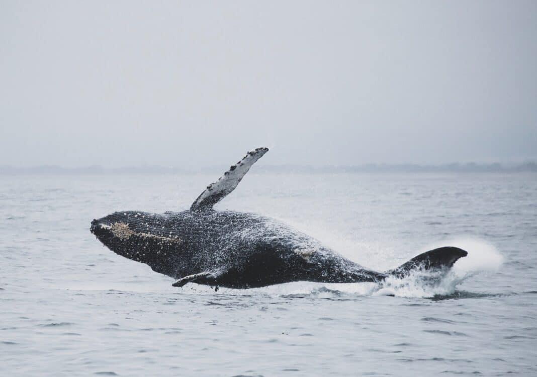 balene-salvate-sri-lanka