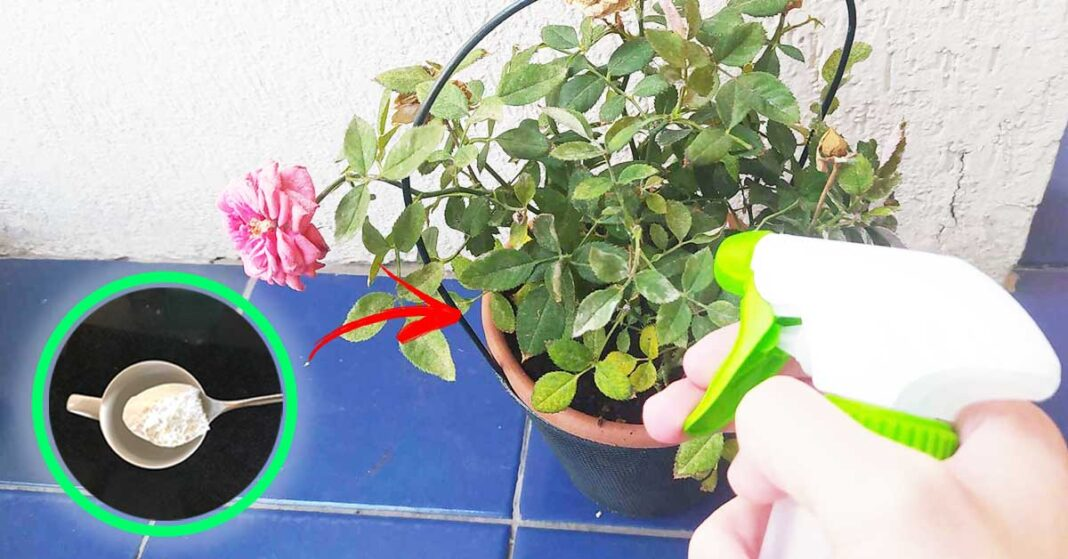 bicarbonato-piante-balcone