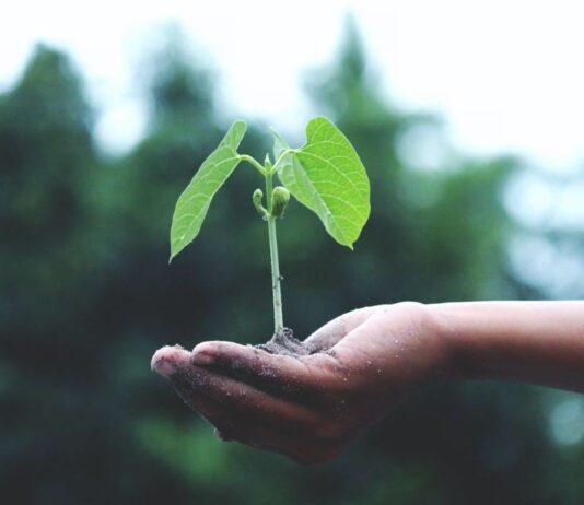 piantare-semi-riduce-stress