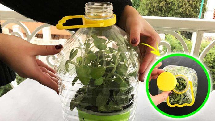 mini-serra-bottiglia
