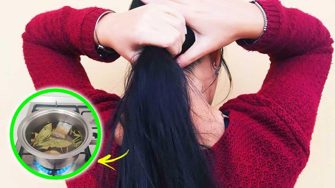 alloro-camomilla-capelli