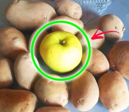 come-non-far-germogliare-patate