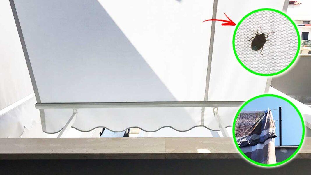 cimici-balcone