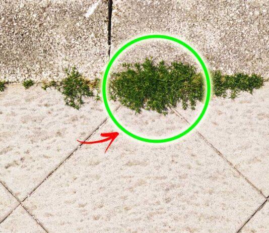 come-eliminare-erbacce-mattonelle