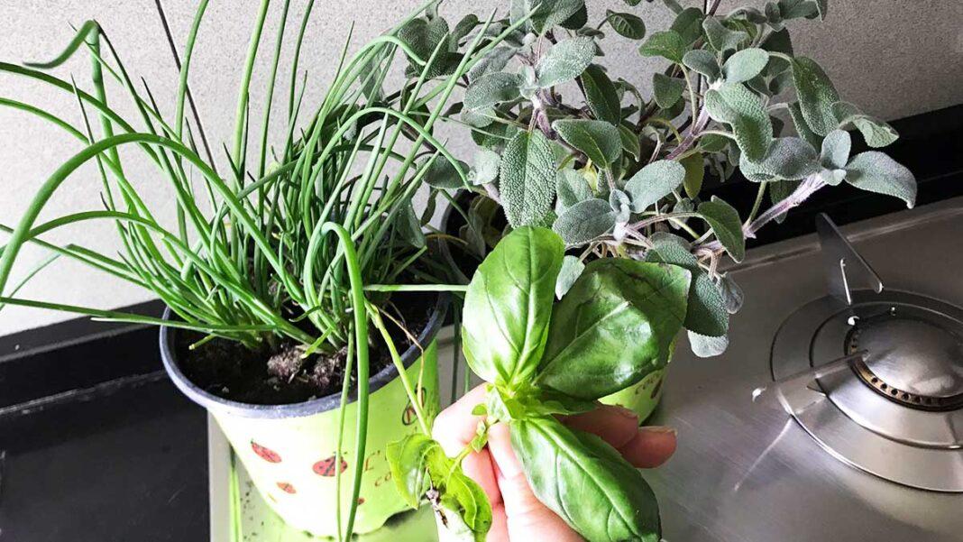 erbe-aromatiche-cucina