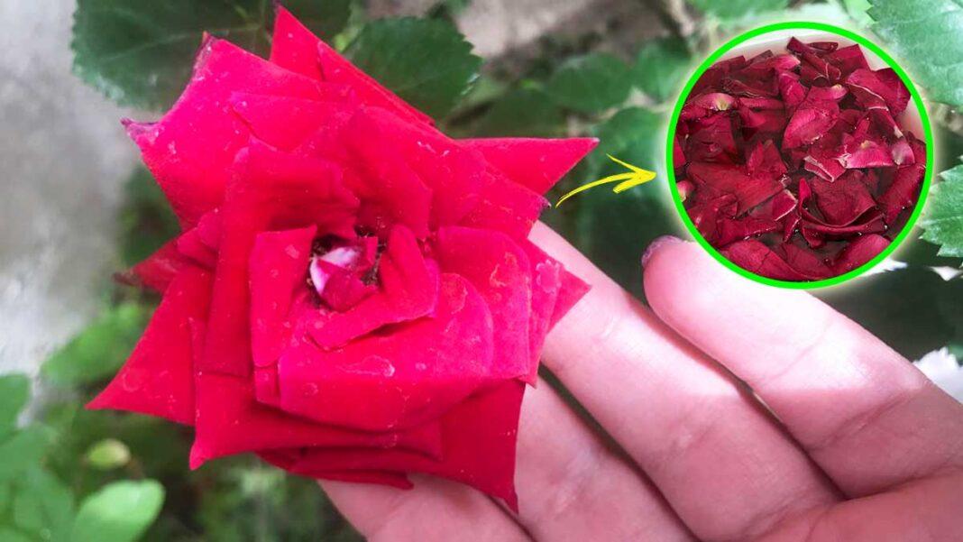 acqua-di-rose-viso