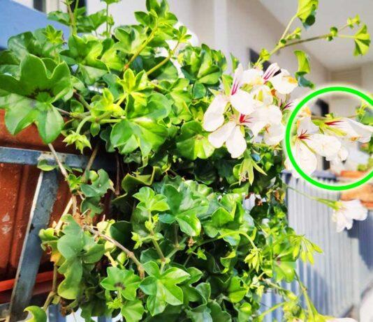 come-avere-balcone-fiorito
