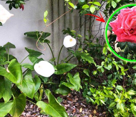 come-avere-giardino-bello