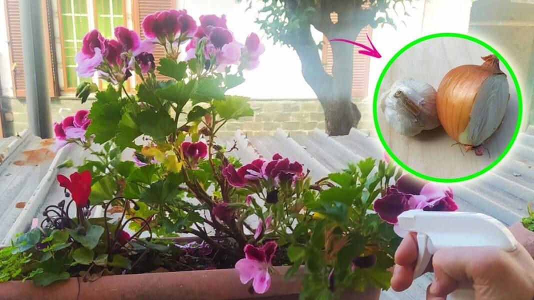 insetti-balcone