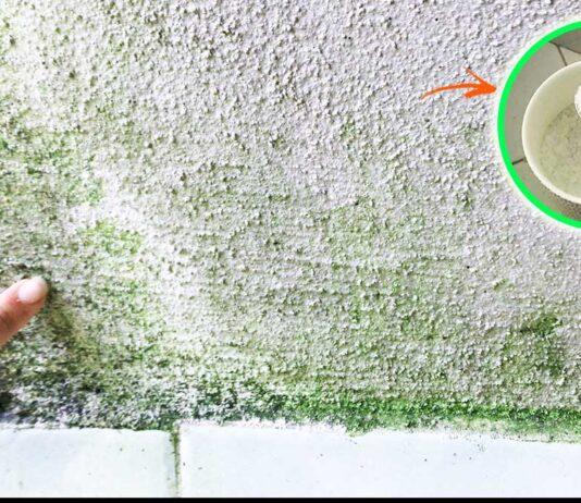 muschio-giardino-muri