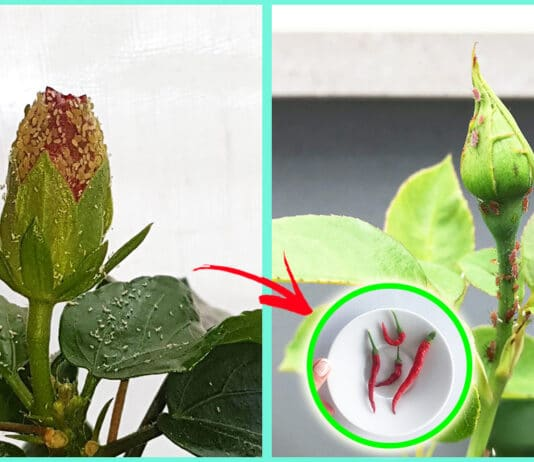 parassiti-piante