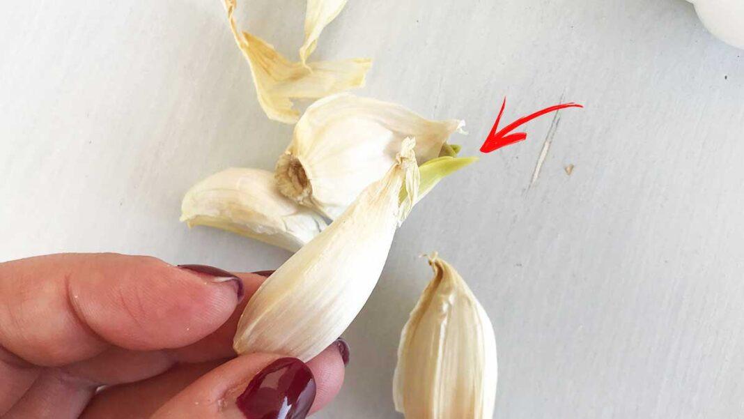 aglio-germogliato