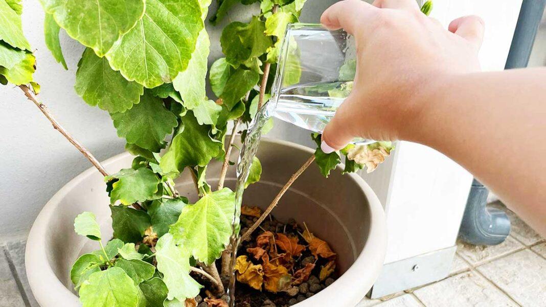 bicchiere-aceto-piante-balcone