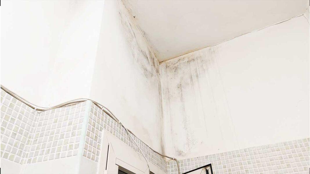 come-pulire-casa-rischio-muffa